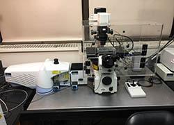 PE UltraView